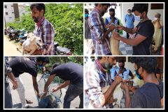 Stray dog vaccination