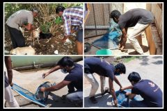 Team Bark India catches dogs for vaccination