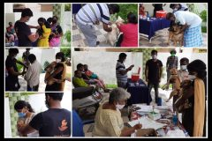 Vaccination camp by Bark India